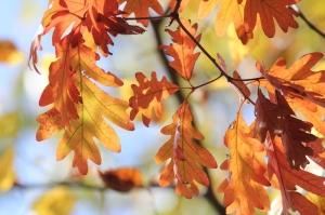Fall leaves at Addison Oaks (800x533)