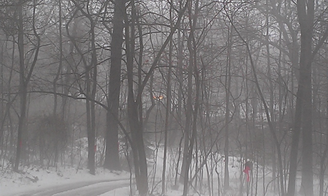 Foggy view of tractor tearing down trees across Dutton (800x479)