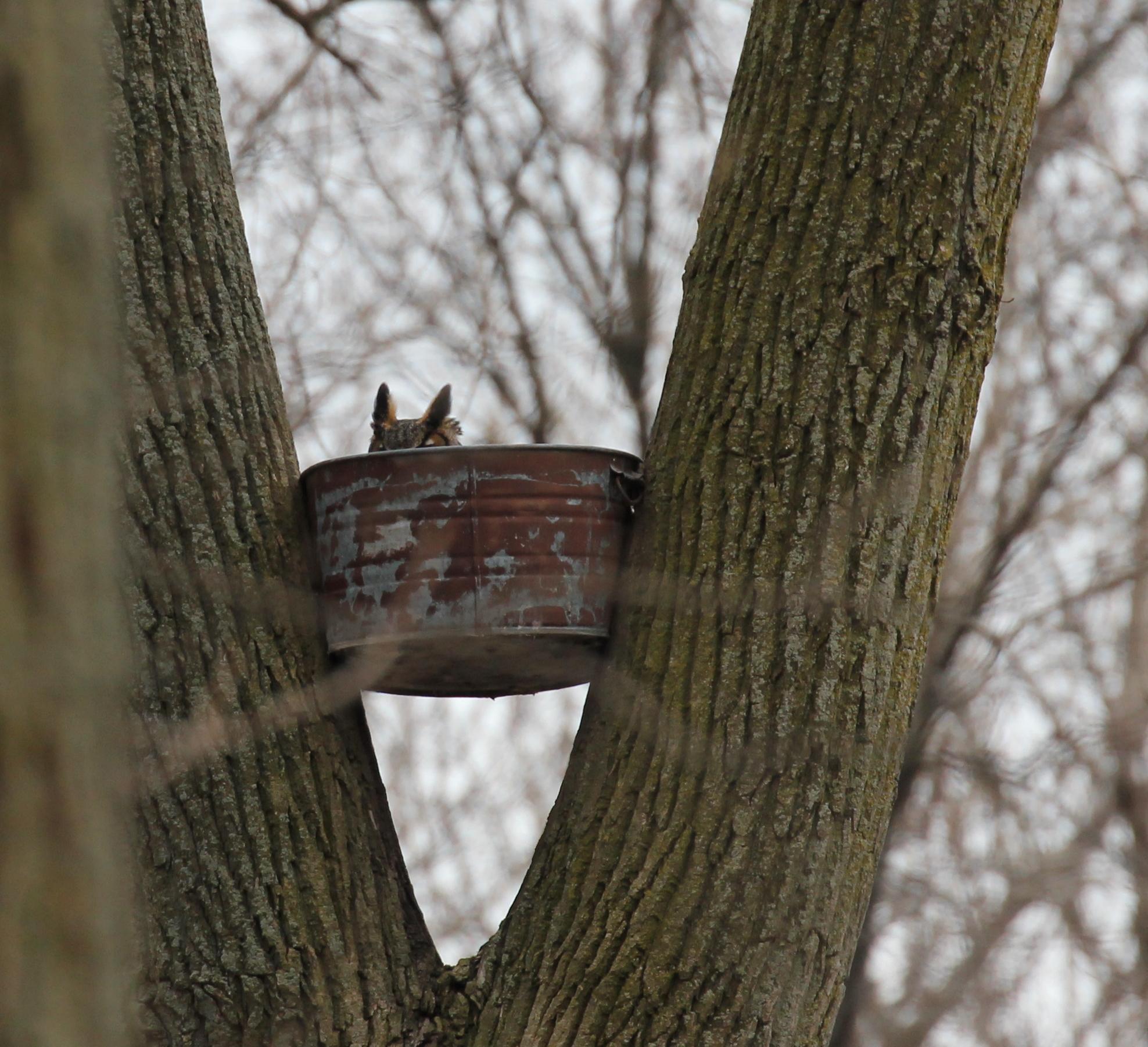 Great Horned Owl House Plans