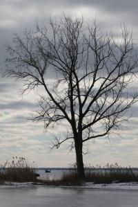 Winter scenery at LSCMP - lone tree (683x1024)