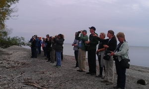 Birders spread out on the beach, scanning the shrub line for warblers. I much prefer this type of birding experience!