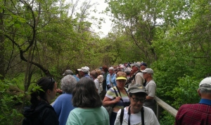 Crowded section of the Magee Marsh boardwalk