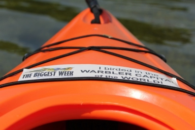 Even my kayak has a birding bumper sticker!