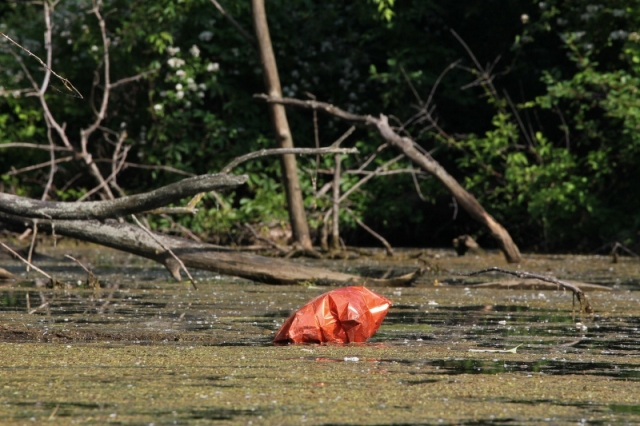 Helium-filled balloon with ribbons tangled in the lake