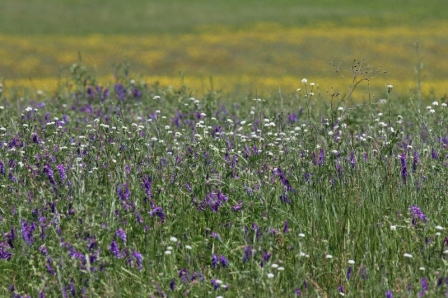 The meadow was filled with mostly purple and yellow wildflowers, and smaller numbers of white ones -- so pretty.