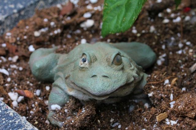One-eyed frog