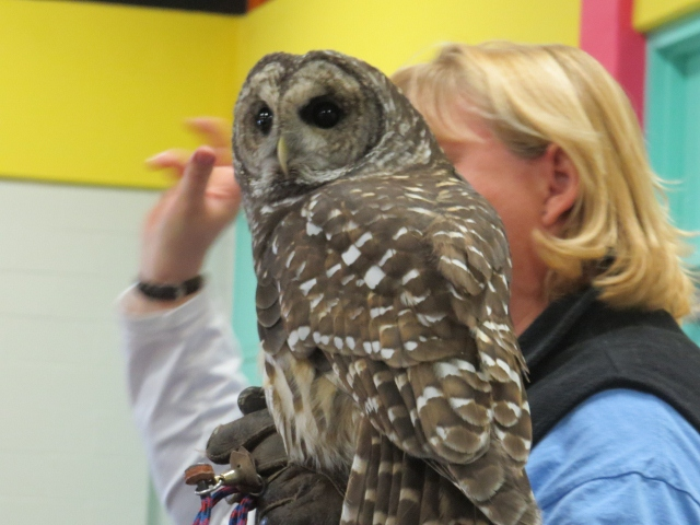 Barred Owl from Leslie Nature Center - Copy (640x480)