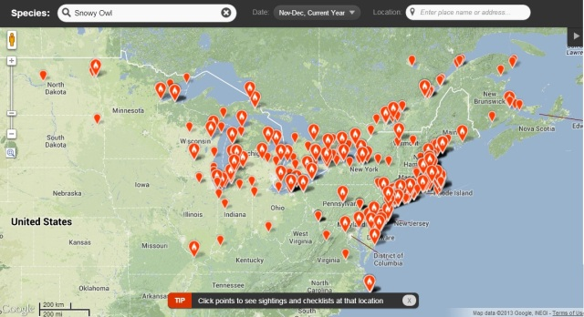 Snowy Owls irruption map from eBird