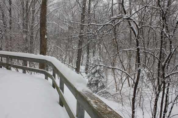 Deck railing and snowy woods (1024x683)