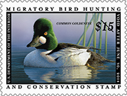 2013-2014DuckStamp