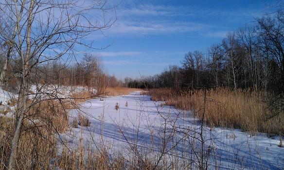 Frozen marsh