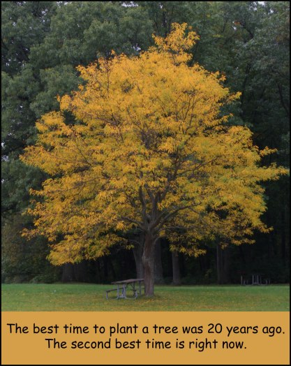 blog---tree-with-yellow-leaves-and-quote
