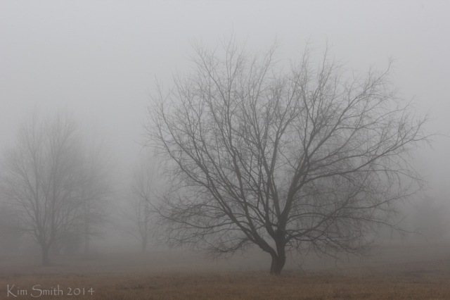 Big tree in fog