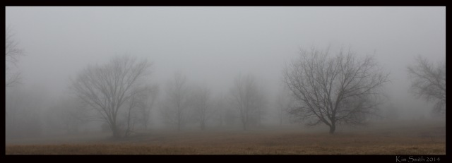 Trees in fog - banner style