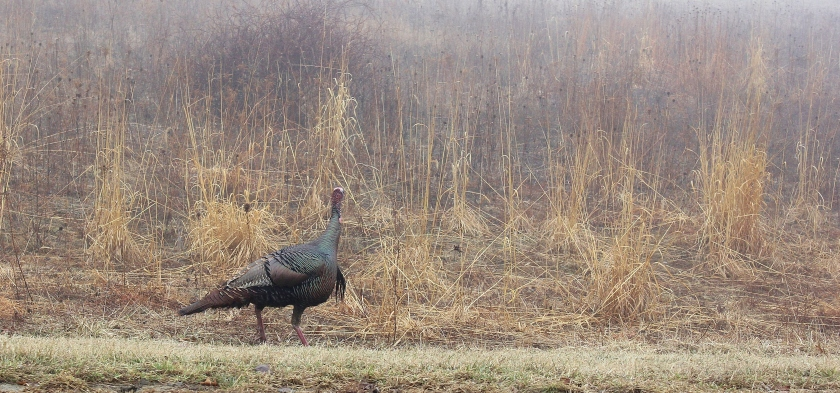 Turkey in the fog