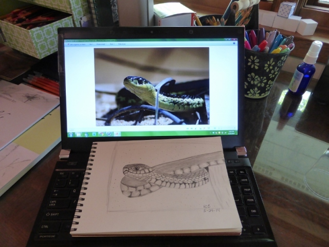 Garter snake sketched from my photo.