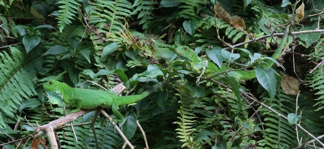 It wasn't all about the birds -- I loved finding these perfectly-camouflaged lizards