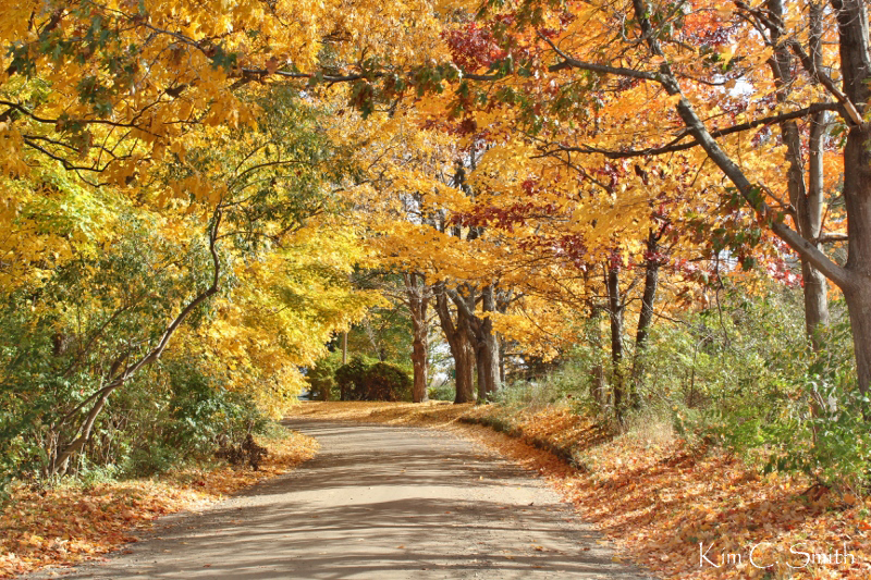Curving rural road with fall foliage and sunlight w sig