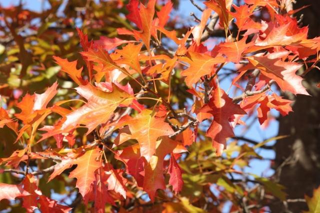 Fall foliage (1) (640x427)