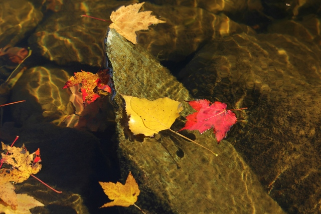 Leaves floating on water with dappled sunlight and rocks (640x427)