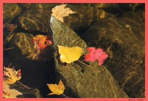 Leaves floating on water with dappled sunlight and rocks