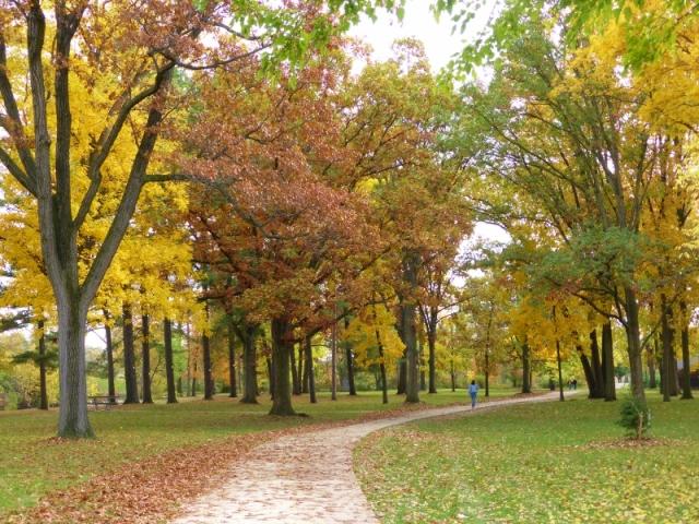 Rochester Municipal Park (13) (800x600)
