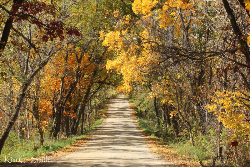 Rural road in Lapeer county with fall foliage w sig
