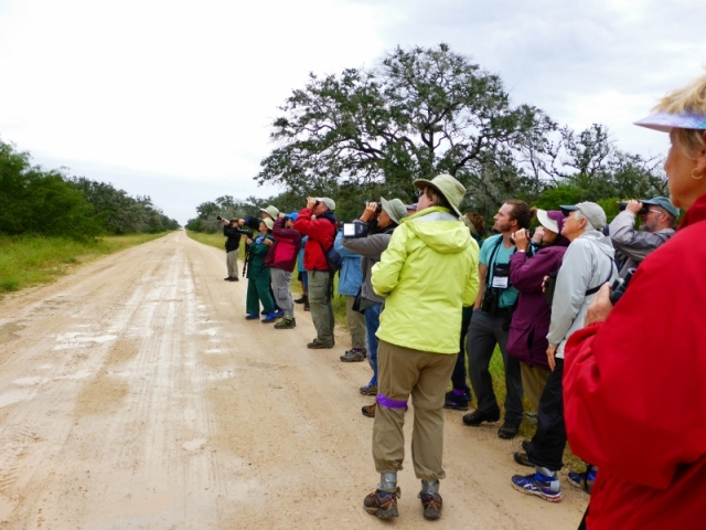 Birders in the rain at King Ranch v2 (800x600)