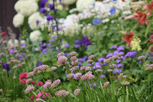 Photo Friday for blog - flower garden
