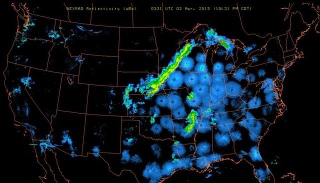 Bird radar April 1 2015