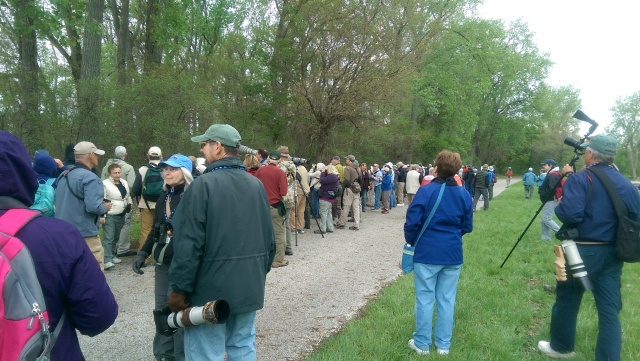 Field trip at Magee Marsh  - May 12, 2015 - Tom Stephenson and Scott Whittle