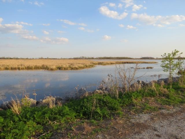Metzger Marsh