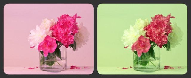 Collage of tinted peonies