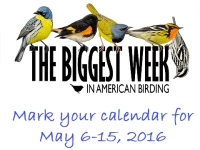 2016 Biggest Week in American Birding