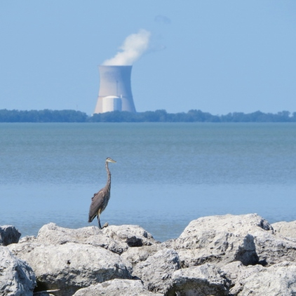 Great Blue Heron and nuclear power plant - smaller file
