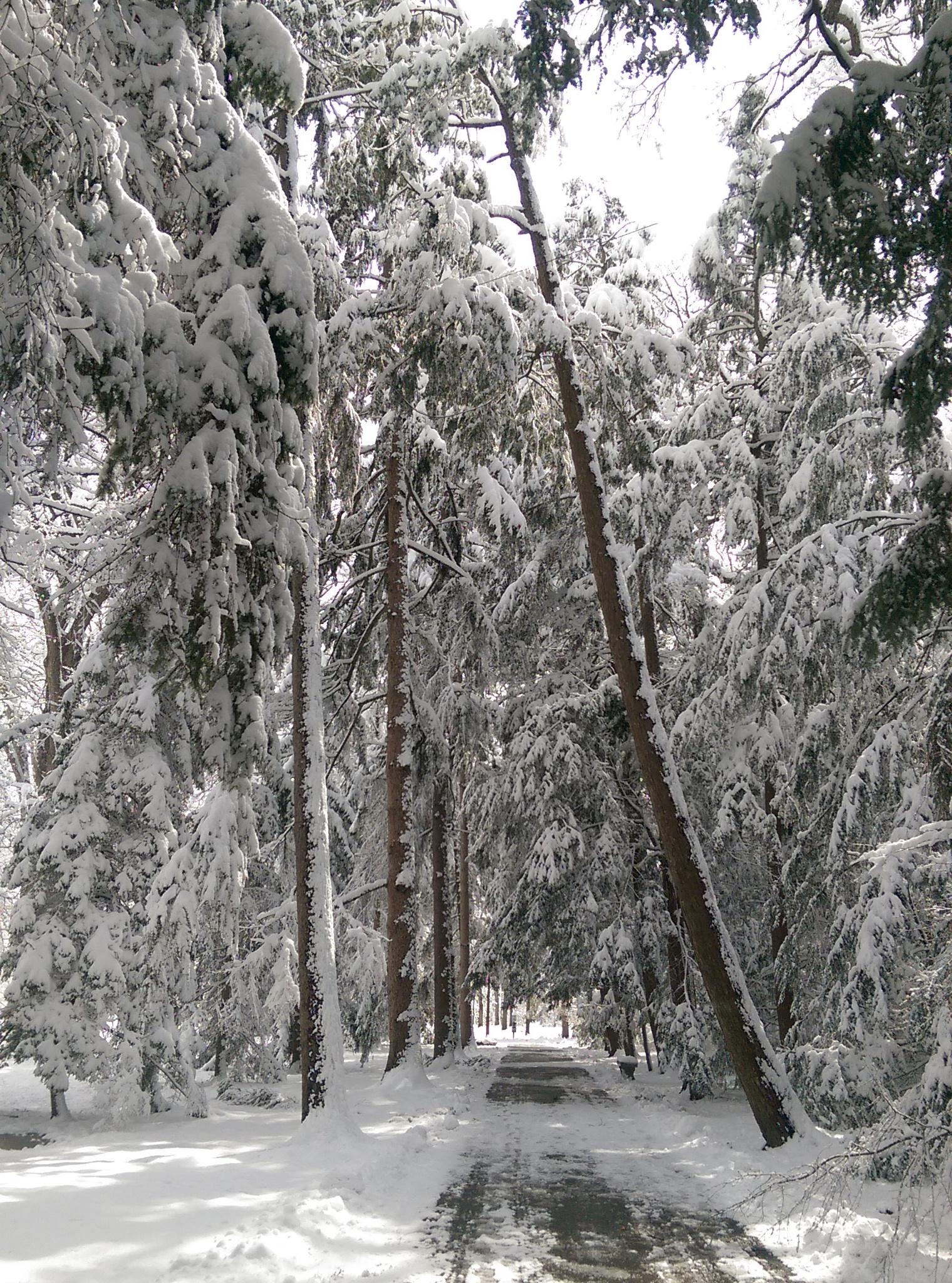 Hayes Memorial - April snow v3