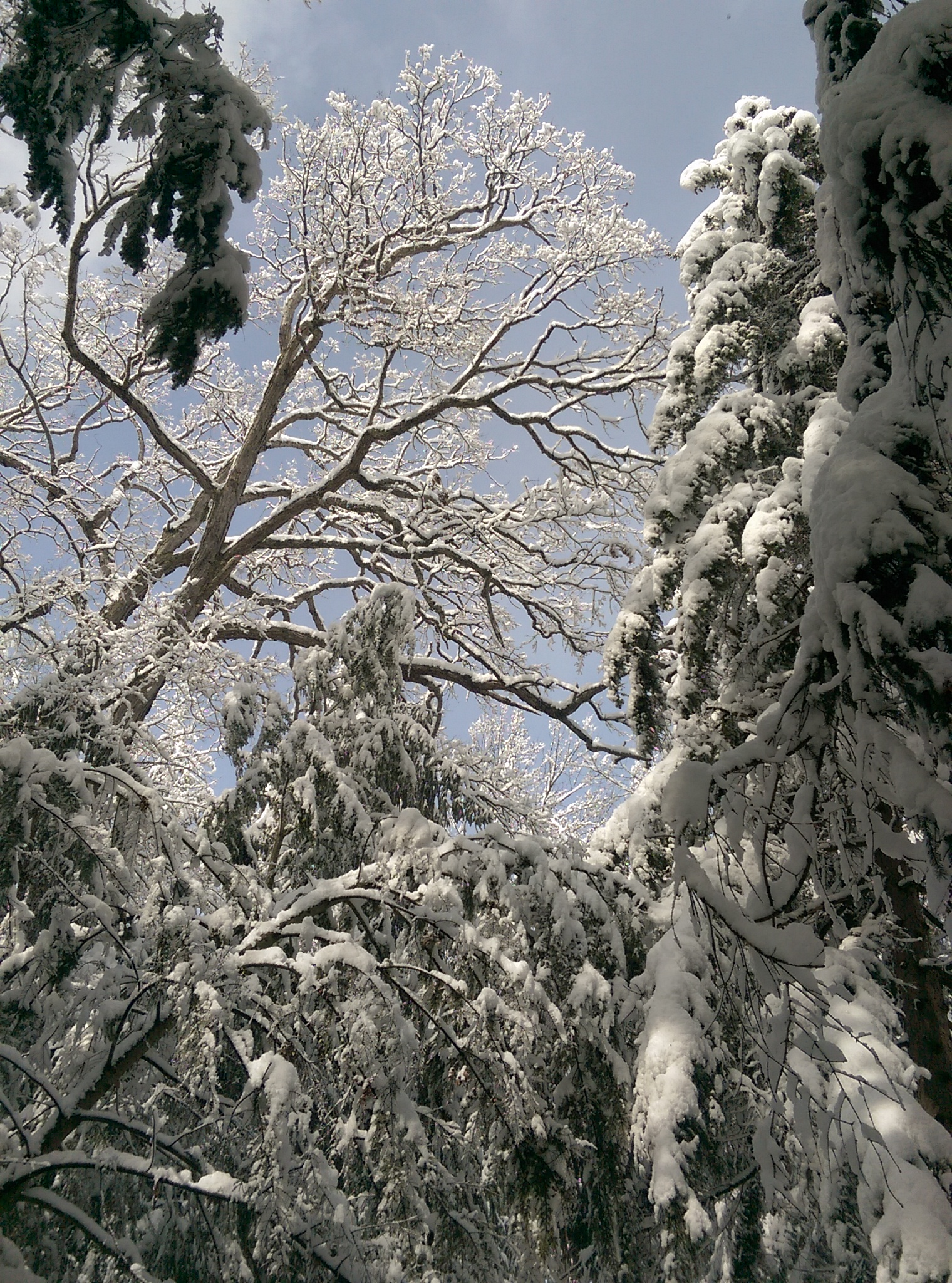 Hayes Memorial - April snow v6