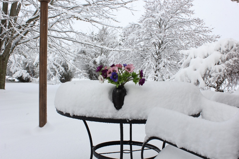 Seven inches of snow on patio April 9 2016 (800x533)