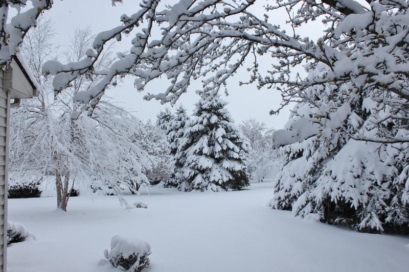 Snow in backyard April 9 2016 (800x533)