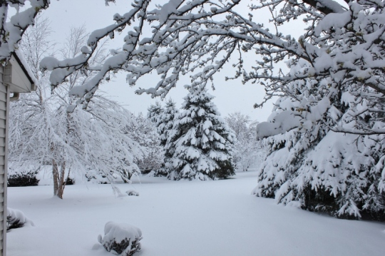 Snow in backyard April 9 2016 (800x533)