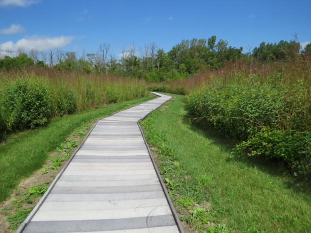 Boardwalk at Blue Heron Reserve (800x600)