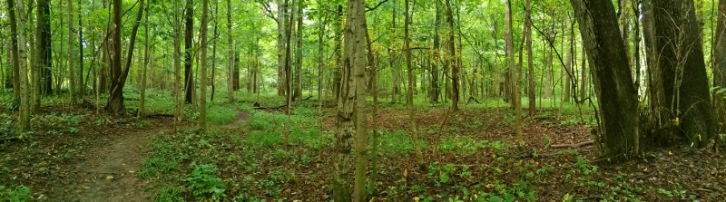 Panorama of woods at Collier State Nature Preserve