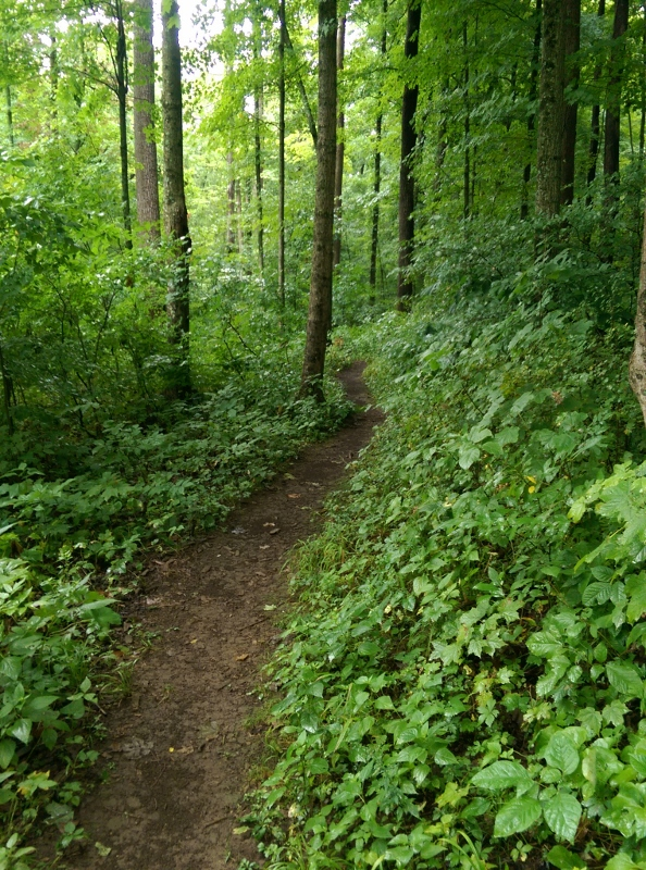 Trail through woods at Collier State Nature Preserve (594x800)