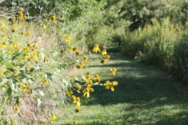 Path at Creek Bend Farm with coneflowers (800x533)
