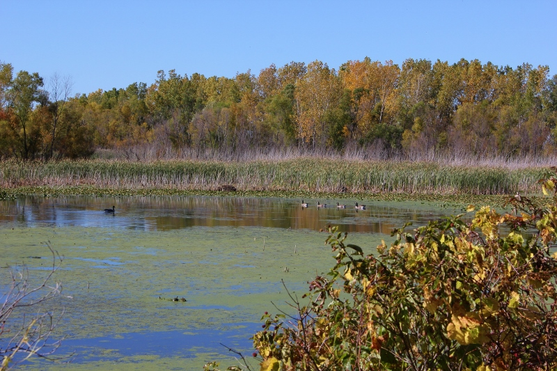 marsh-view-at-sheldon-marsh-resized