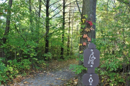 trail-signs-and-virginia-creeper-at-sheldon-marsh-resized