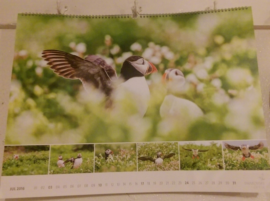 puffins-on-calendar-in-garage-1024x765