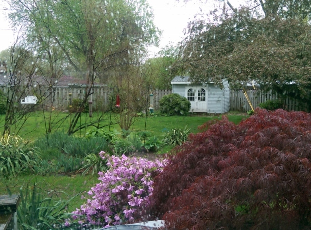 Rain-spattered window and view of backyard - blog