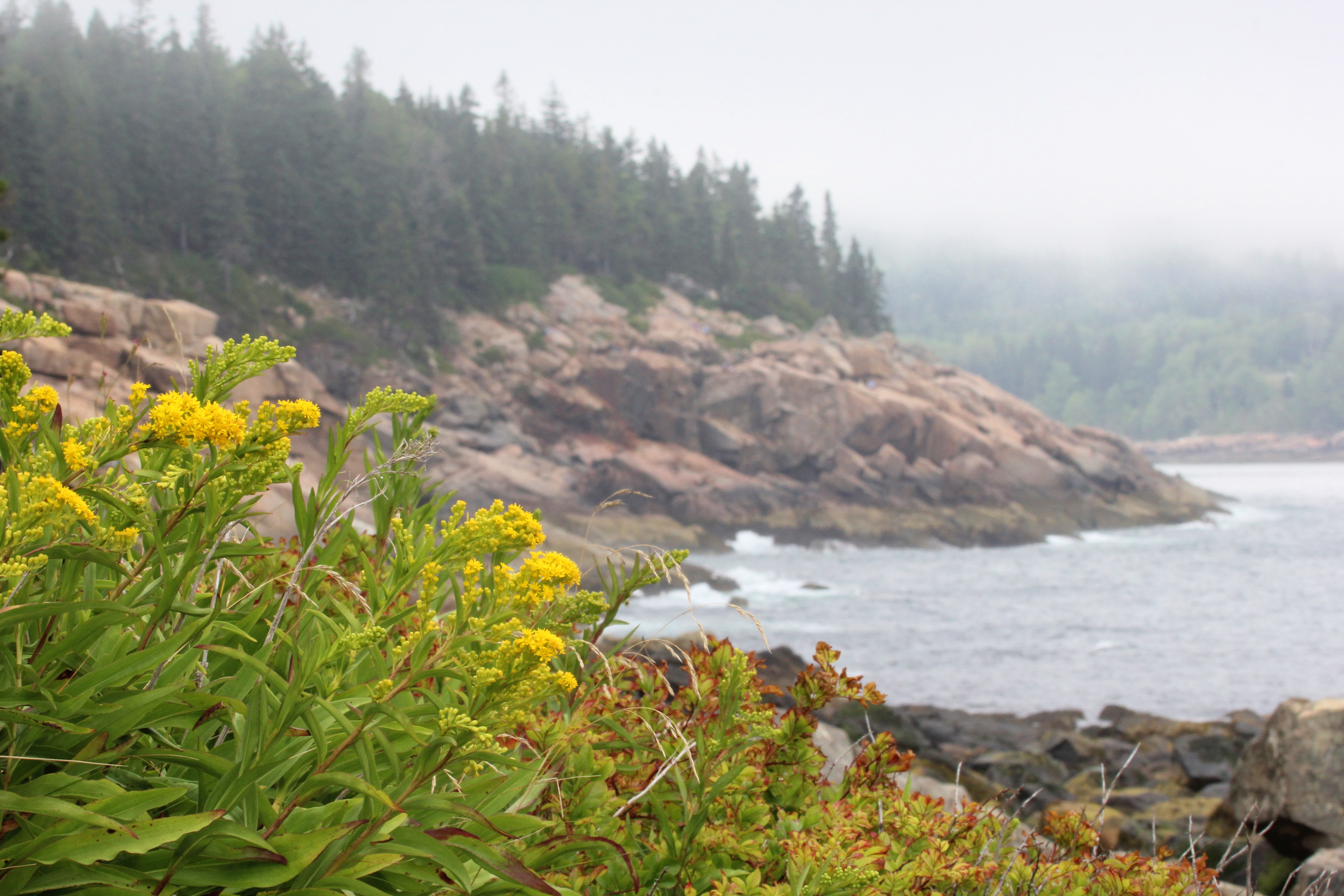 Yellow flowers and rocks at Otter Point