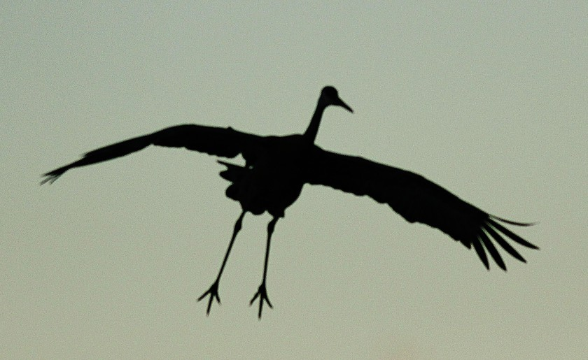 Crane silhouette v1
